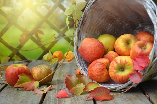 Apfelsaft selber herstellen in der Erlebnisscheune