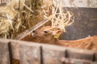 Landwirtschaftlicher Betrieb im Sauerland