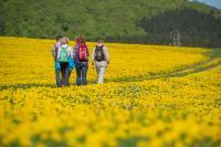 Natur genießen und wandern im Sauerland